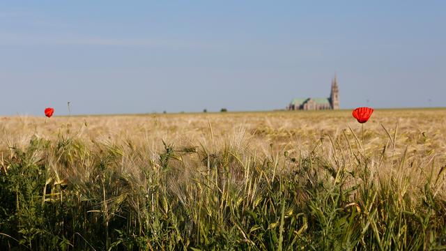 Cathédrale Notre-Dame de Chartres à travers les champs