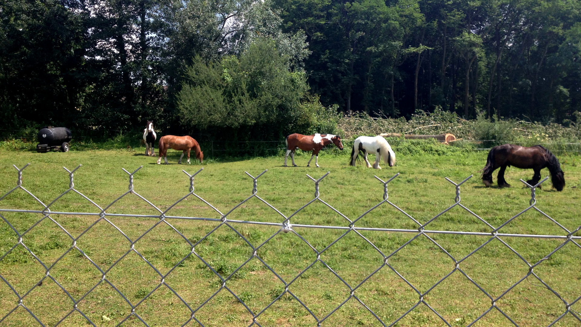 Champs avec des chevaux