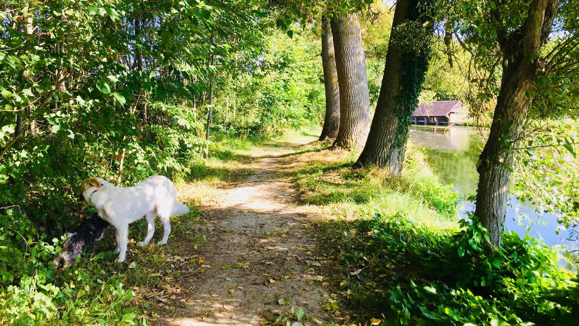 Promenade canine sur les bords de l'Eure