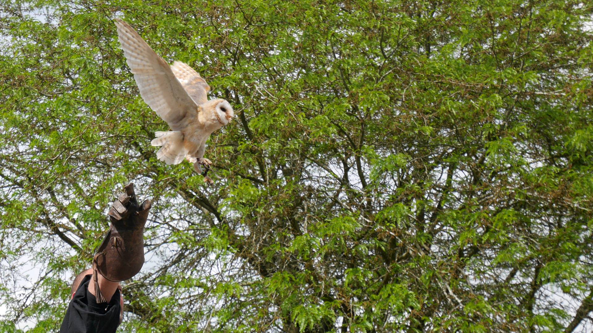 Spectacle d'oiseaux à Chartres 1254