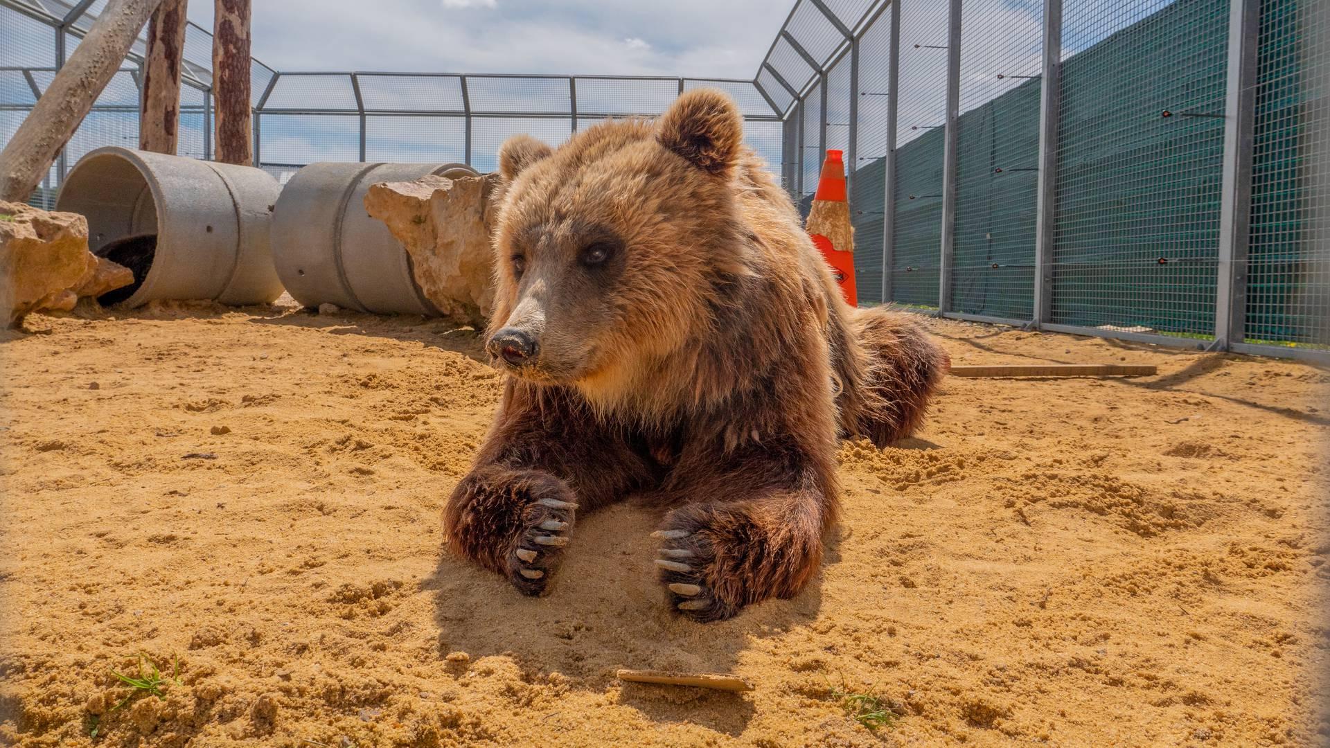 Ours à La Tanière en Eure-et-Loir