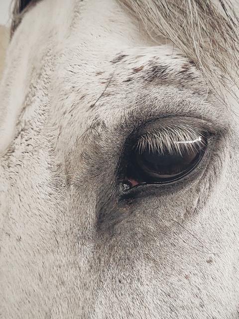 illustration d'un cheval blanc