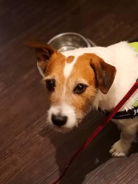 Dog friendly restaurant avec Kookyto - Copyright Véronique Domagalski