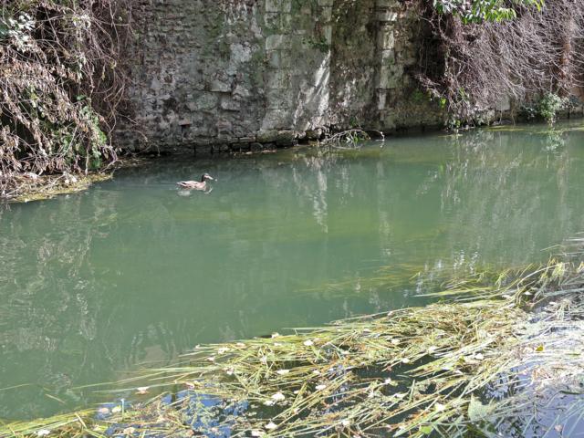 Lavoir sur les bords de l'Eure