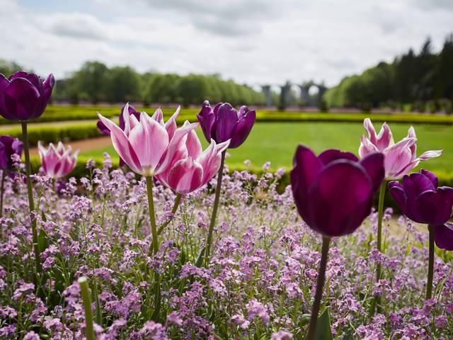 Tulipiades du château de Maintenon