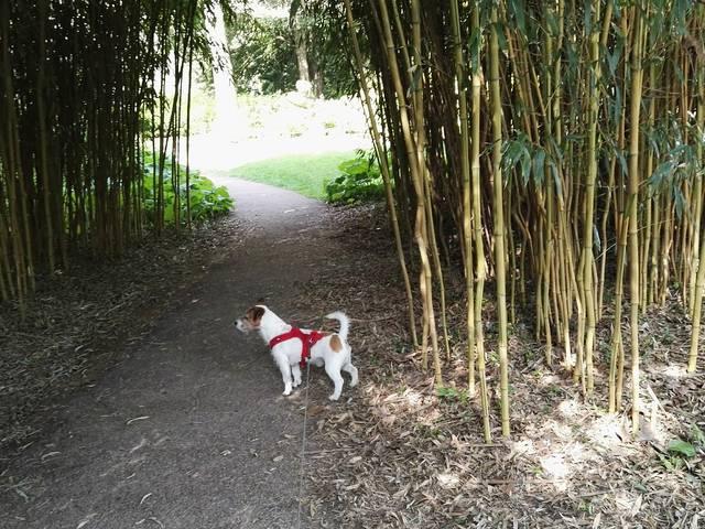Kooky le chien à la bambouseraie du Jardin d'Horticulture